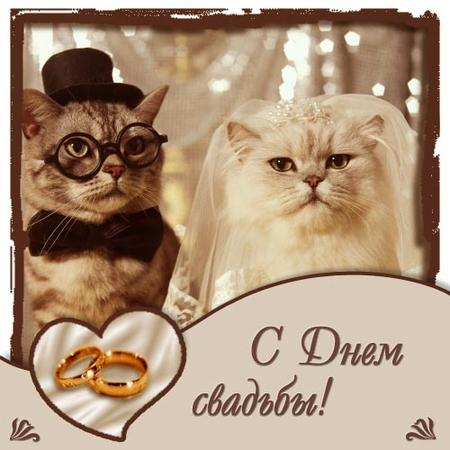 Поздравления с 21 юбилеем свадьбы